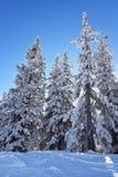 vinter för skognatursun Royaltyfri Foto
