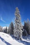 vinter för skognatursun Royaltyfria Bilder