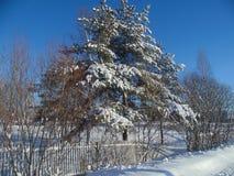 vinter för skognatursun Arkivfoto