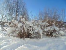 vinter för skognatursun Royaltyfri Bild