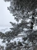 vinter för skognatursun Arkivfoton
