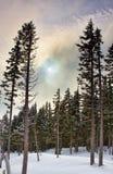 vinter för skogplatssolnedgång Royaltyfri Fotografi