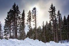 vinter för skogplatssolnedgång Arkivbilder
