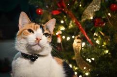 vinter för snowflake för snow för pott för kattjulillustration Arkivbild