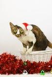 vinter för snowflake för snow för pott för kattjulillustration Arkivfoto