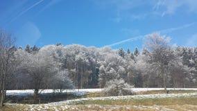 vinter för sun för fjäder för snowfall för slutfokussnow Arkivbild