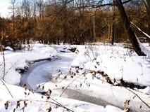 vinter för sun för fjäder för snowfall för slutfokussnow Royaltyfri Foto