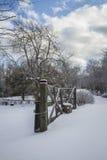 vinter för trädgård för bakgrundsskönhetdesign din snöig Arkivbild