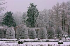vinter för trädgård för bakgrundsskönhetdesign din snöig Royaltyfria Bilder