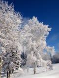 vinter för tree för berättelse för liggandesnow snöig Fotografering för Bildbyråer