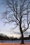 vinter för tree för oisolerad skymningpark snöig Royaltyfri Fotografi