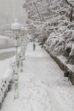 vinter för trees för avenykurvväg snöig Arkivfoton