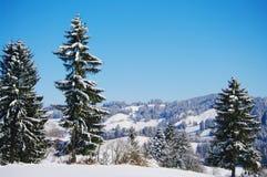 vinter för trees för julliggandenoel Royaltyfri Foto