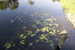 vinter för vatten för flod för kustisliggande Royaltyfria Foton