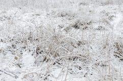 Vinter första snow Arkivfoto