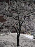 vinter f?r designbildtree arkivfoto