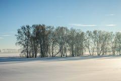 Vinter field Arkivbild