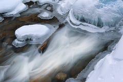 Vinter fiskmåsliten vikkaskad Royaltyfria Bilder