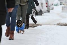 Vinter Folket och hunden går på en mycket snöig trottoar Folket kliver på envilsekommet djur bana Iskall trottoar Is på trottoare fotografering för bildbyråer