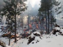 Vinter Forest Fire royaltyfri fotografi