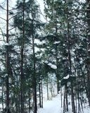 Vinter Forest Trail Royaltyfria Bilder