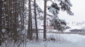 Vinter fryste skog och träd stock video