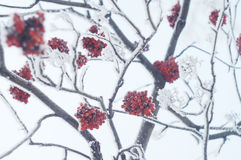 Vinter fryste trädfilialer Royaltyfria Foton