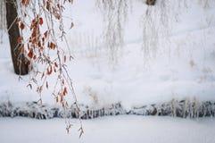 Vinter fryste trädfilialer Arkivfoto