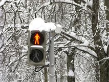 Vinter gata, trafikljus för gångare som är röd, stopp royaltyfri foto