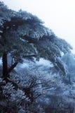 Vinter Huangshan - frysa Tree Arkivfoton