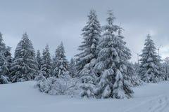Vinter i berg, nytt år arkivfoton