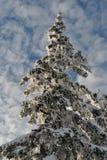 Vinter i berg, nytt år Royaltyfria Foton
