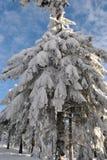 Vinter i berg, nytt år Royaltyfri Foto