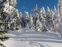 Vinter i berg, nytt år Royaltyfria Bilder