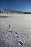 Vinter i bergen Fotografering för Bildbyråer