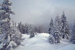 Vinter i bergskogen Arkivbilder