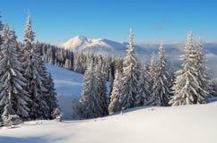 Vinter i bergskogen Arkivfoton