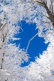 Vinter i Bieszczady, Polen Royaltyfri Fotografi