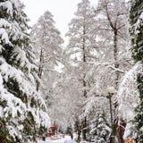 Vinter i BraÈ™ov Arkivbilder