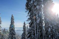Vinter i Carpatian berg Arkivfoto