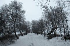 Vinter i Czechia royaltyfria bilder