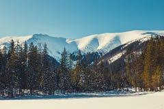 Vinter i de Tatra bergen royaltyfri fotografi