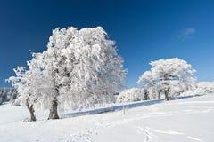 Vinter i den svart skogen Arkivfoto