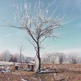 Vinter i den svart skogen Arkivfoton