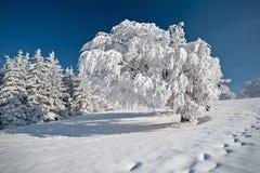 Vinter i den svarta skogen Arkivfoton