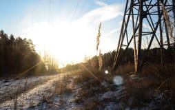 Vinter i dentäckte skogen Arkivfoton