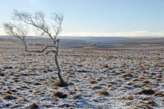 Vinter i Derbyshire Royaltyfri Fotografi