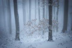 Vinter i en härlig dimmig skog arkivfoto