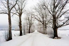 Vinter i Europa Arkivbilder