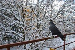 Vinter i förorten Salzburg stad, område av Lehen, Österrike, royaltyfri foto